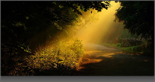 Image of a Golden Ray of Light Shining through on some Darkened Woods